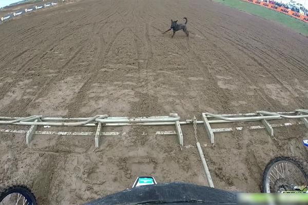 Un chien s'invite au départ d'une course de motocross
